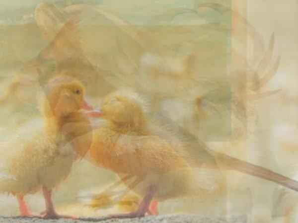 Какое животное вы увидели первым на картинке? Тест на характер.