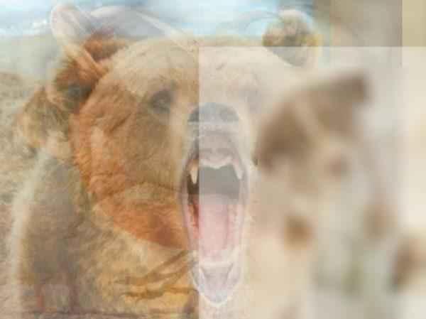 Какое животное вы увидели первым на картинке? Тест на характер 8
