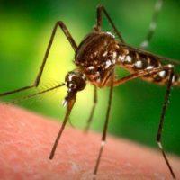 Какие запахи отпугивают комаров?