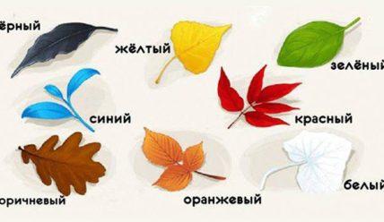 Тест на самопознание: выбери листочек и узнай что-то новое для себя…