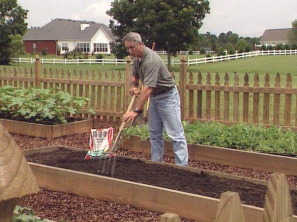 Как посадить перцы, чтобы получить хороший урожай